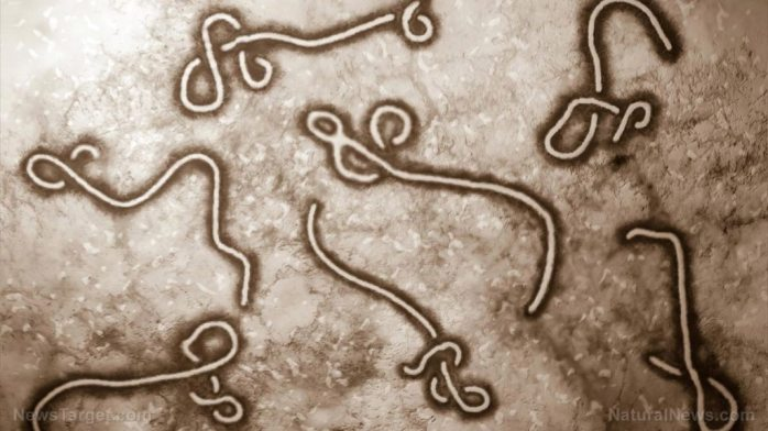 """Endless fear merry-go-round: WHO says Ebola risk is now """"very high"""""""